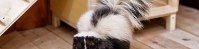В Московском зоопарке откроются курсы ухода за экзотическими животными