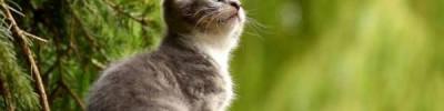 В Турции построят деревню для бездомных кошек – СМИ