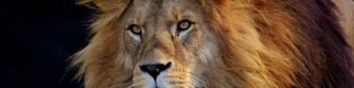 В ЮАР лев загрыз девушку на парковке