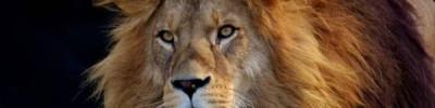 В зоопарке США у львицы выросла грива