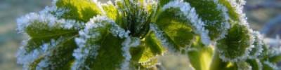 В Подмосковье к концу недели ожидаются заморозки