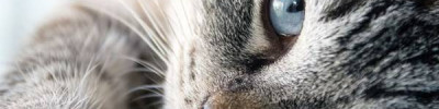 В аэропорту в Нью-Йорке неделю ловили сбежавшую кошку