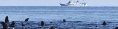 Экологи подсчитали масштабы влияния человека на Мировой океан