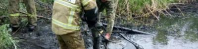 Тонут в чёрном золоте. Как животных спасают из нефтяных ловушек