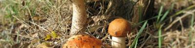 Календарь народных примет. Ждать ли урожай грибов, если ночью выпала роса?