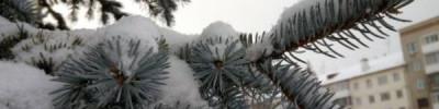 В Кемеровской области выпал первый снег