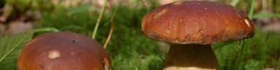 Депутат Госдумы призвал возродить заготовительные конторы для сбора грибов