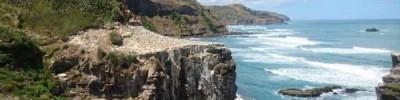В Новой Зеландии туристы нашли на пляже «гигантское пульсирующее существо»