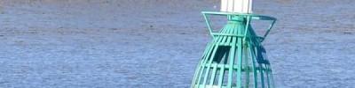 Жители Лондона заметили в Темзе кита