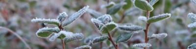 В Москве и Подмосковье зафиксированы первые заморозки