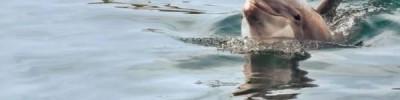 Причины гибели дельфинов Черного моря выяснит комплексная экспедиция