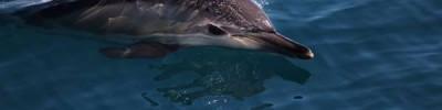 Высшее звено. Стартовала морская экспедиция по изучению дельфинов
