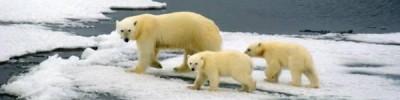 WWF: численность диких животных сократилась на 60% за 40 лет