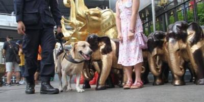 Туристы в Таиланде будут чаще проходить проверки иммиграционной полиции