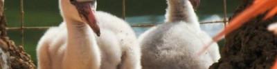 Московский зоопарк подсчитал вылупившихся птенцов