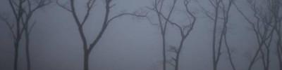 МЧС предупредило жителей Москвы о сильном тумане