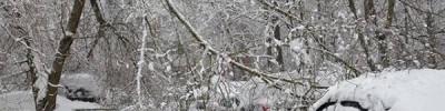 В Москве ожидается метель и гололедица