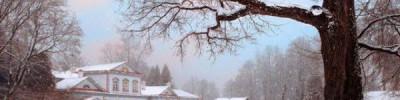 Дерево года. Российский дуб получил высшую европейскую оценку