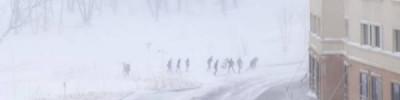 Синоптики прогнозируют метель и гололедицу в Москве и Подмосковье