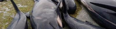 Правительство Исландии продлило разрешение на китовую охоту