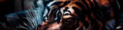 Умер старейший тигр Приморья, утащивший собак у пограничников