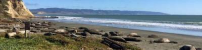 Тюлени захватили один из калифорнийских пляжей из-за «шатдауна»