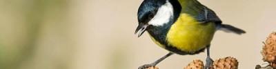 Чем угостить пернатых? Выбираем место и угощения для птиц