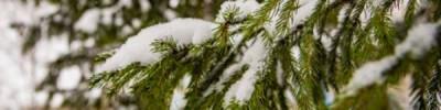 В Москве 19 февраля похолодает до -12 градусов