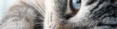В Кузбассе кошка проехала под капотом 100 км и выжила
