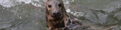 В Находке нашли покрытого угольной пылью детеныша тюленя