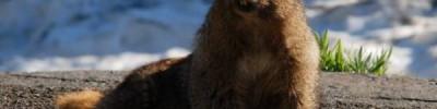Московский зоопарк опубликовал видео проснувшихся после спячки сурков
