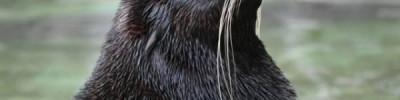 1 мая посетители Московского зоопарка увидят кормление мангустов