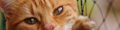 Россельхознадзор: китайцы массово скупают кошек и собак в РФ