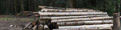 Власти Самары остановили вырубку рощи около храма
