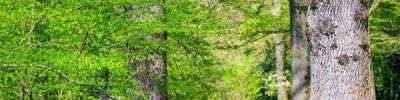 Россельхознадзор рассказал об опасности американских шелкопрядов