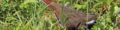 На Сейшелах возродился вид птиц, вымерший 136 тысяч лет назад
