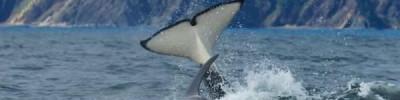 Вторую партию косаток из «китовой тюрьмы» выпустят в море через две недели