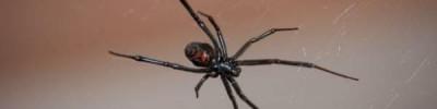 Биолог прокомментировала сообщения о ядовитых пауках в Московской области