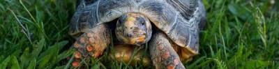 Более четырех тысяч черепах пытались ввезти в Россию, выдавая их за капусту