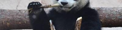 Ми-ми-мишки. За какими животными из зоопарков можно наблюдать онлайн?