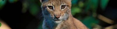 Медведев утвердил список запрещенных для домашнего содержания животных