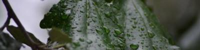 В Сербии из-за сильных дождей ввели режим стихийного бедствия