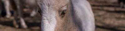 В пензенском зоопарке маленький пони умер от переедания