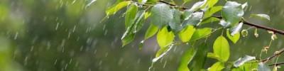 Синоптики рассказали, когда в Москве кончатся дожди