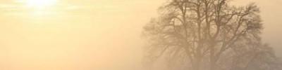 Дым от лесных пожаров в Сибири добрался до Татарстана