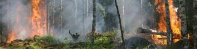 Почти 14 тысяч гектаров леса горит на Чукотке