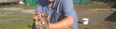 Гектор, живи! В Челябинске спасают раненого пьяным взломщиком тигренка