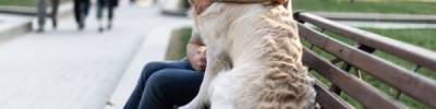 Овчарка, лабрадор или бигль? Каких собак кому лучше заводить
