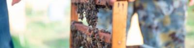 Эксперты оценили ущерб от массовой гибели пчел в российских регионах