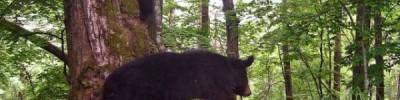 В Приморье забравшийся на дерево медвежонок чуть не упал на ученого